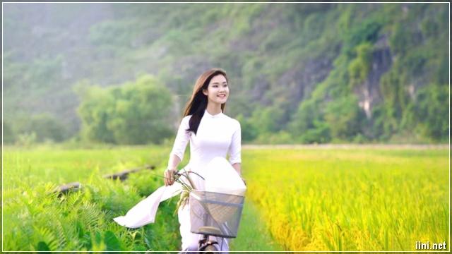 cô gái áo dài đạp xe trên cánh đồng lúa
