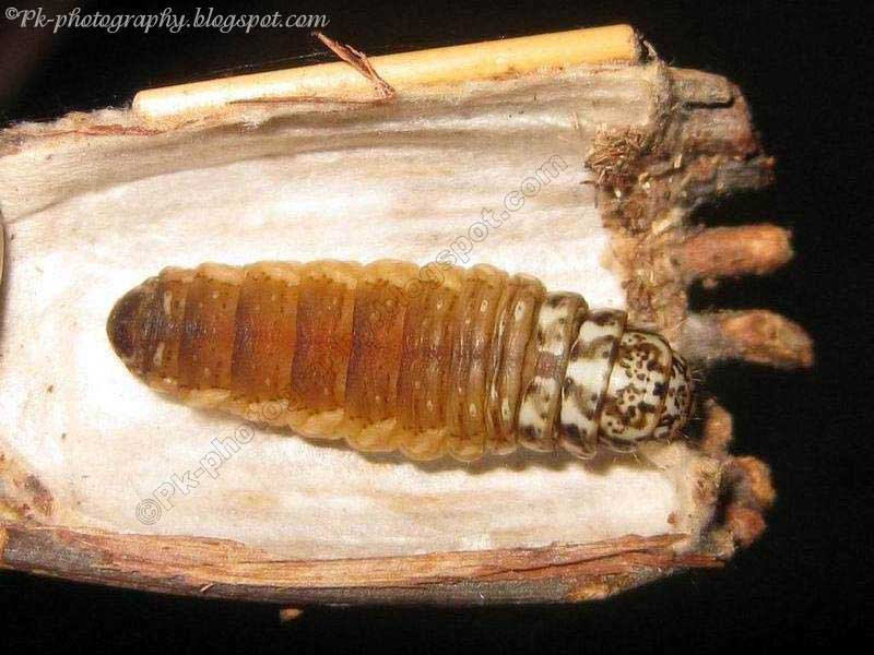 Bagworm Moth Bag | Nature, Cultural, and Travel Photography Blog