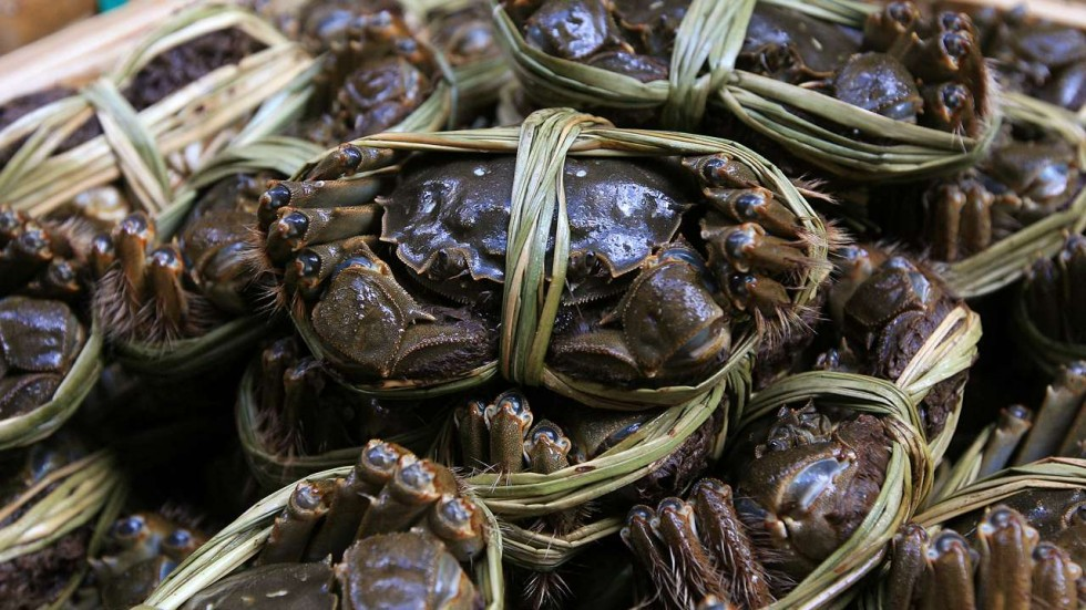 Crab Export from India - Mud Crab Exporters, Mud Crab