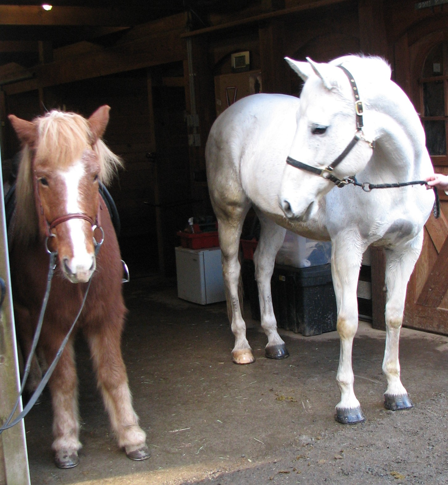 Horse Essay, What do you think...informative?