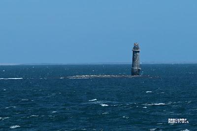 貝殻島灯台には海獣が沢山休んでいました