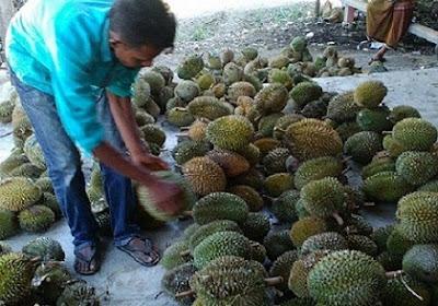 durian sawang
