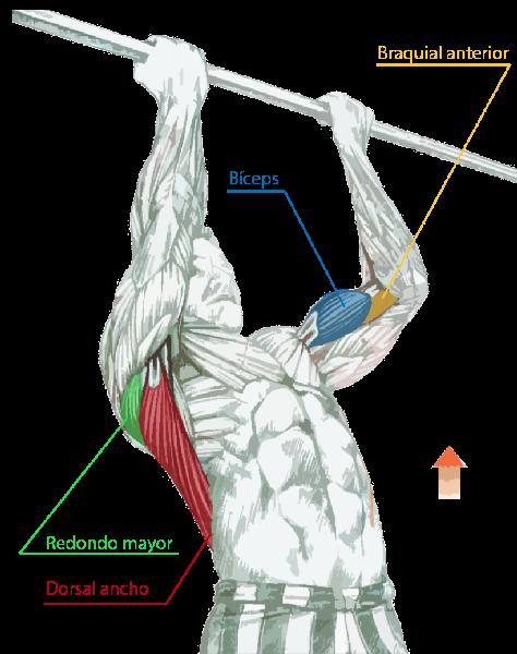 Ejercicios para la espalda - Venezblogger