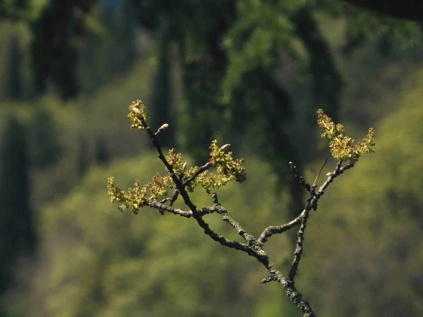 осень в севастополе фото
