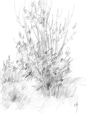 art sketch plein air graphite nature jordan river parkway