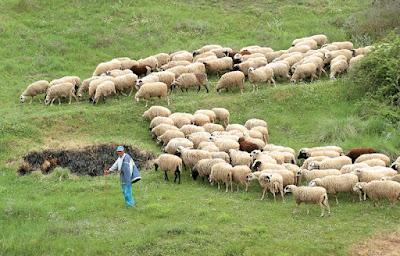Ενημέρωση κτηνοτρόφων στο Φιλιάτι για τα αναπτυξιακά προγράμματα