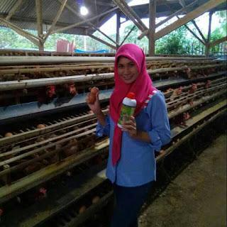 dosis viterna untuk ayam petelur