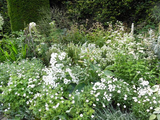 białą rabata, białe kwiaty