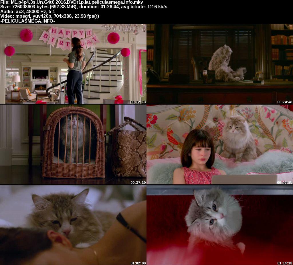 Descargar Siete vidas, este gato es un peligro Latino por MEGA.