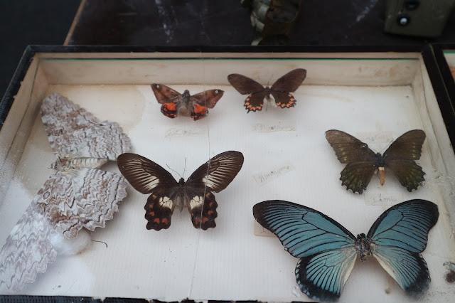 Papillons , Amiens / Photo Atelier rue verte /