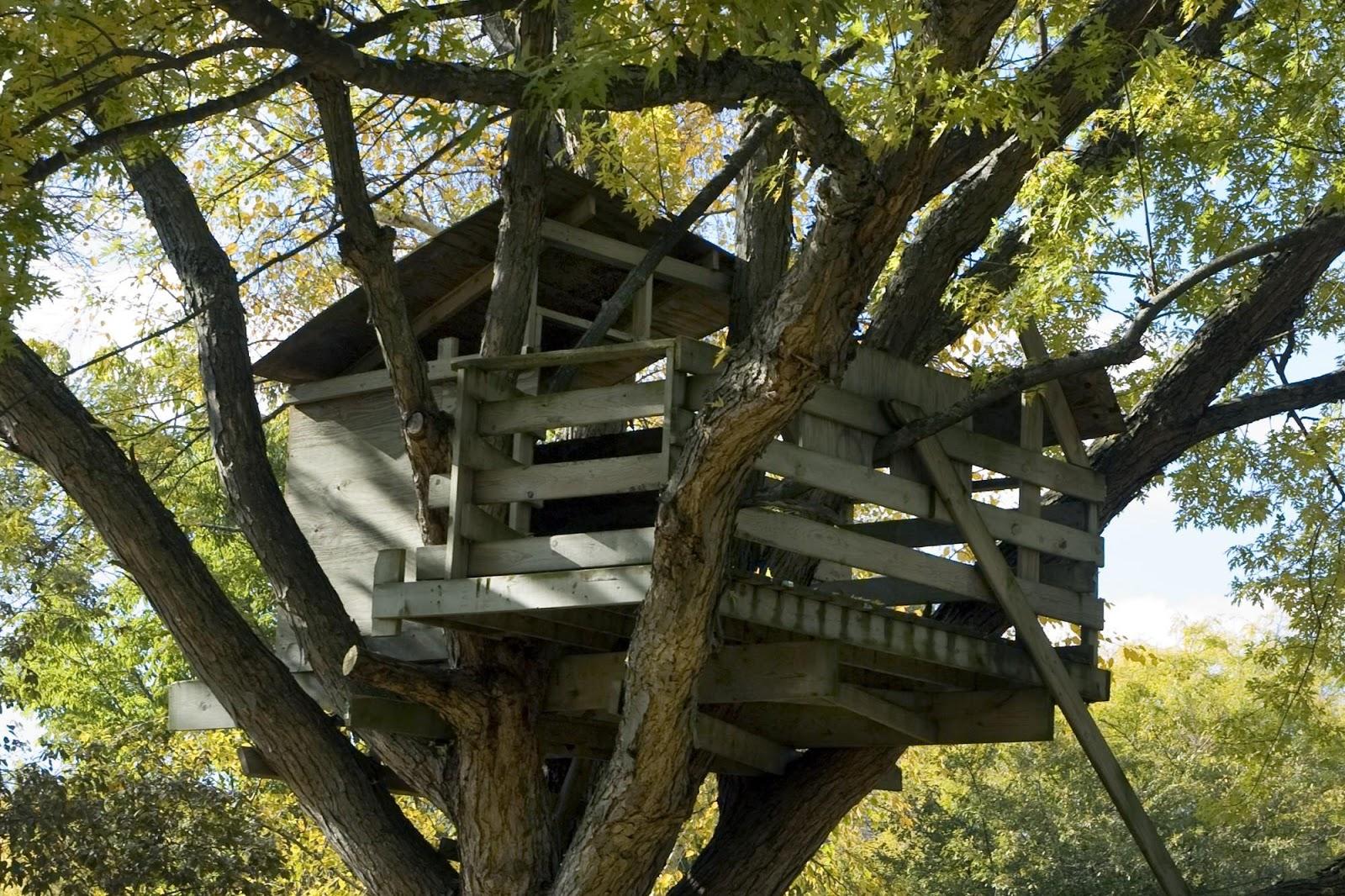Costruire una casa sull albero per bambini ww99 - Come costruire una casa sull albero ...