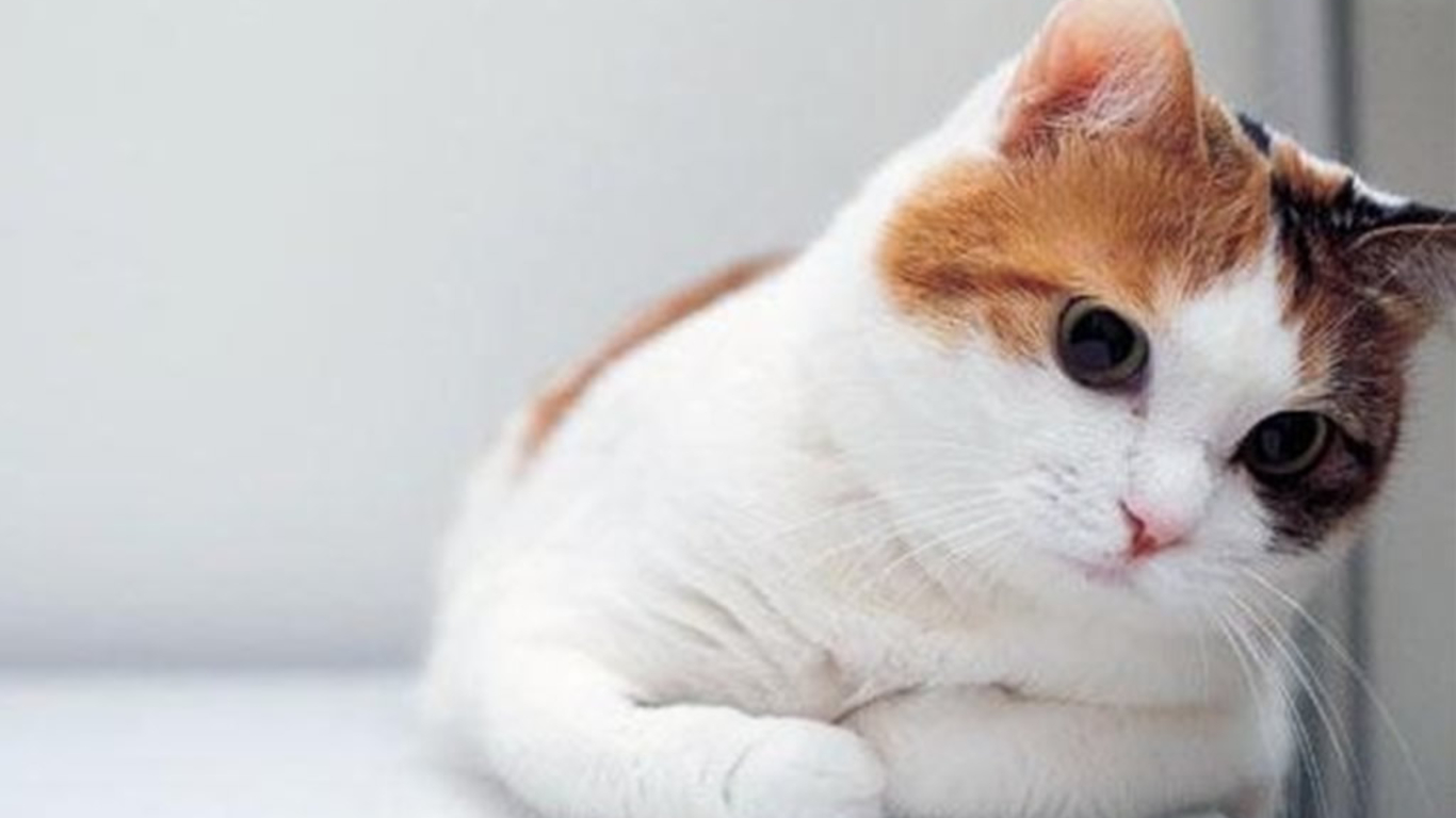 Adorable Cat Wallpaper Wallpapers Quality
