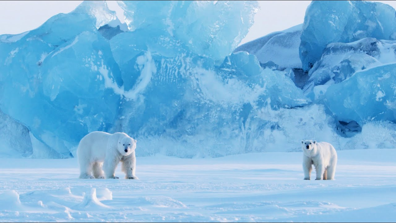 How to Photograph Polar Bears in One of the Most Extreme Places on Earth