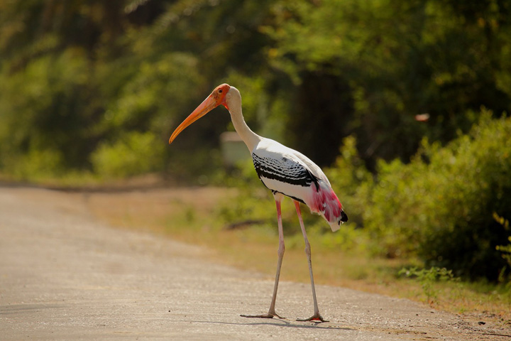 Bharatpur Keoladeo National Park