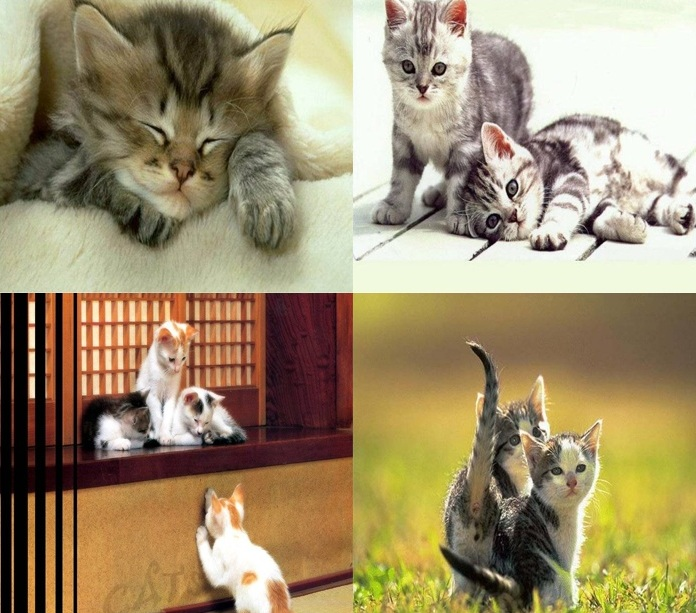 Download Wallpaper Foto Kucing Imut & Lucu