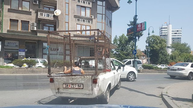 Bild des Tages - Frauentransport in Skopje
