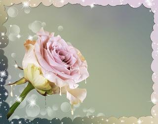 gambar background bunga mawar ping