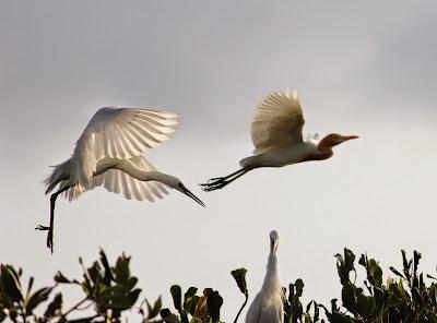 TIBANG BIRD PARK, BANDA ACEH