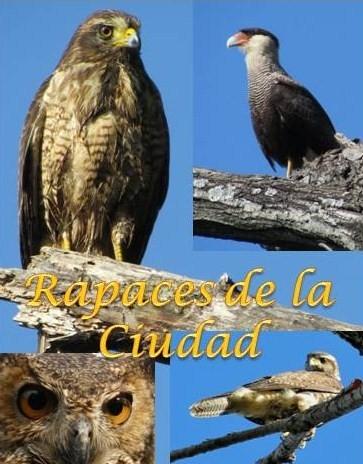 Resultado de imagen para Ribera Norte, la reserva de San Isidro con el 25% de las especies de aves del país