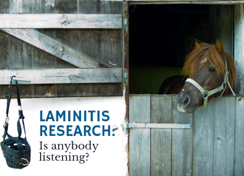 laminitis research spillers royal veterinary college