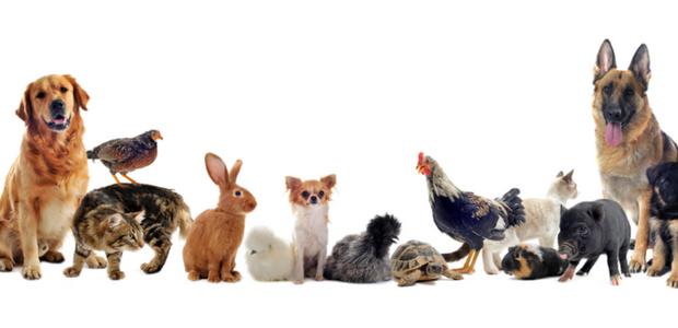 Expressions françaises amusantes avec des noms d'animaux