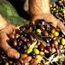 Cronaca. San Severo, furto di olive: la Polizia Locale ferma un uomo di 30 anni