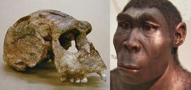 homo erectus palaeojavanicus
