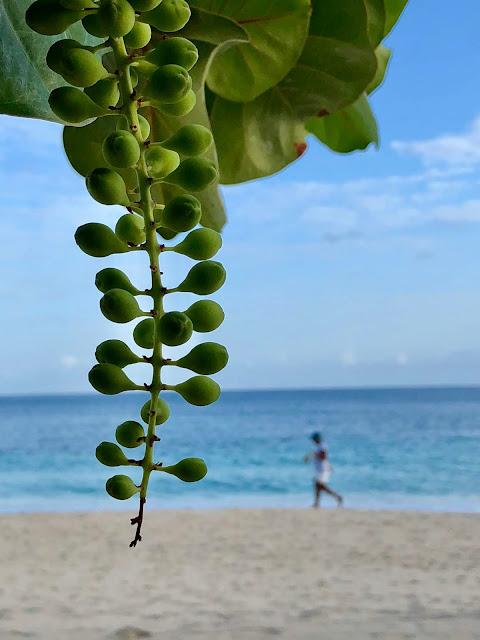 Grand Anse Beach Grenada