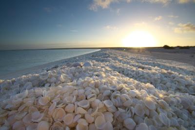 Playas de las conchas - Australia