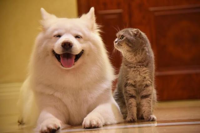 Nhà có một em cún nghịch, một bé mèo chảnh - cứ chí choé với nhau cũng phải!