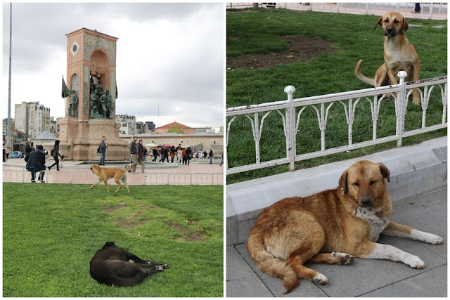 Stray dogs are seen healthy at Taksim Square as they are fed every evening and well-taken care by the government and Animal Welfare in Istanbul, Turkey