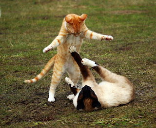 Aggression experienced during play is common especially in kittens