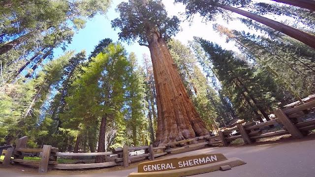 Atração General Sherman na Califórnia