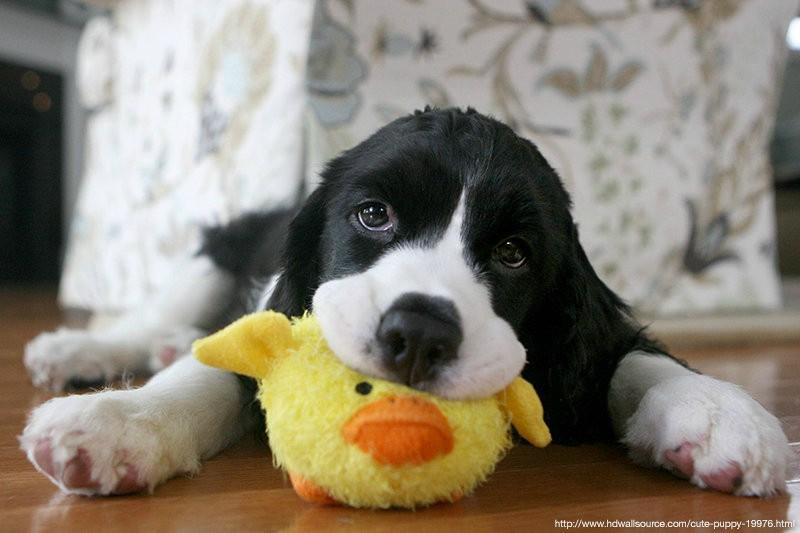 Λάθη που κάνουμε και μπορούν να μειώσουν σημαντικά το προσδόκιμο ζωής του σκύλου μας.