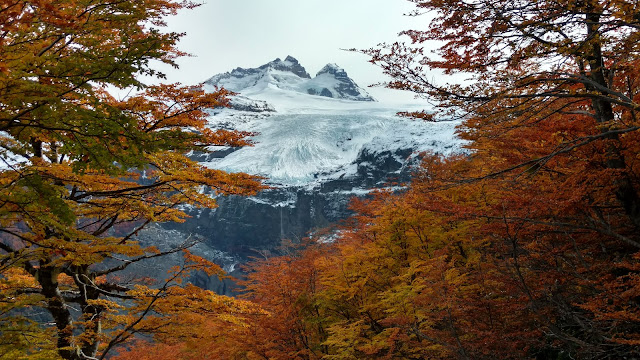 Mount Tronador through the fall trees