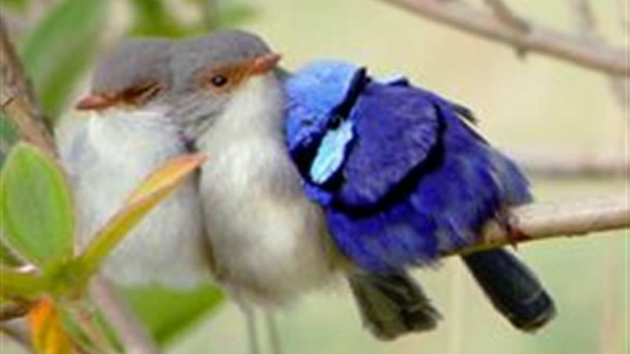 Naughty Funz Funny Birds