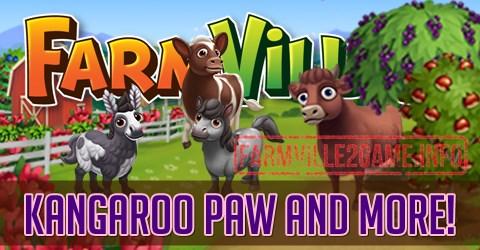 Kangaroo Paw