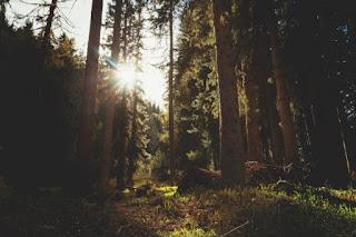 Metsänpeitto