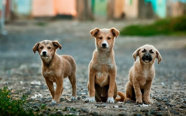 Holland Becomes The First Country Without Stray Dogs