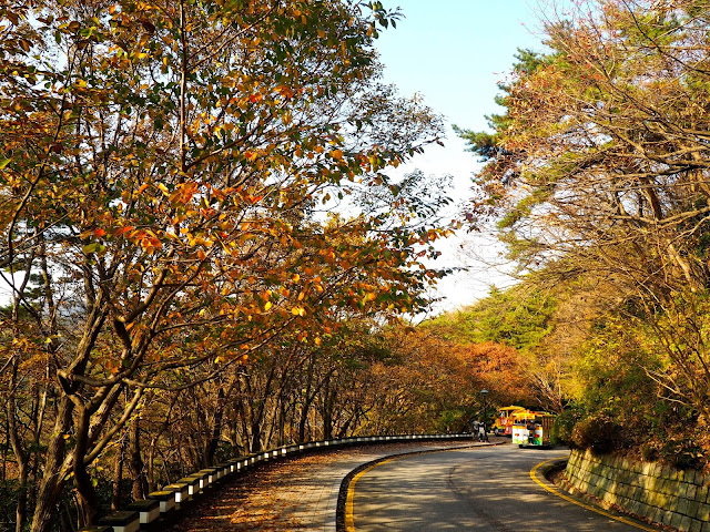 Danubi train driving through autumn foliage in Taejongdae Park, Busan, South Korea