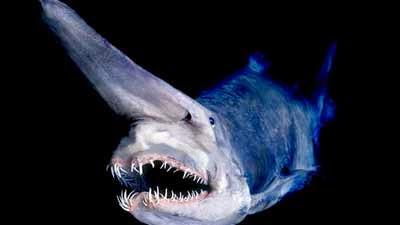 Ikan Purba Yang Masih Ada Sampai Sekarang