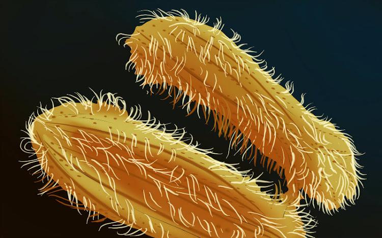 Infección Parasitaria