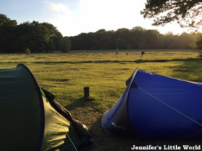 Tents in the New Forest at sunset