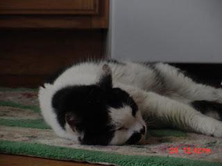 Diabetic Cat Jefferson