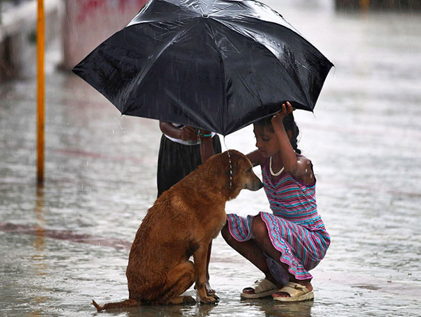 #10 A Girl Uses Her Umbrella To Protect A Stray Dog During Monsoon Rains In Mumbai  - 12 Kids Who'll Restore Your Faith In Humanity