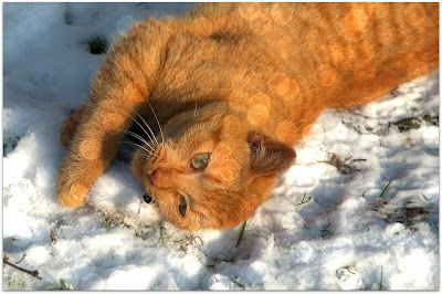 cat+loves+snow - Reasons to Love Winter