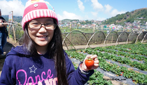 Baguio City - DIY family trip - strawberry picking - La Trinidad - Benguet