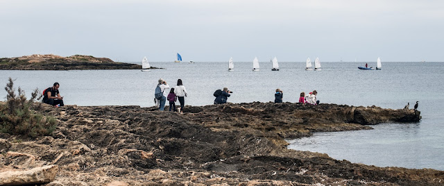 Gente fotografiando cormoranes en Es Carnatge, Palma de Mallorca