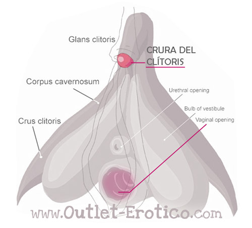 clitoris esquema