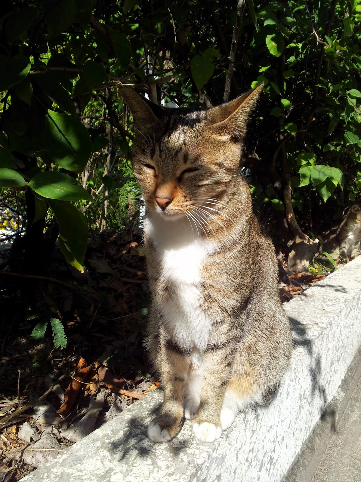 某大學內悠閒的貓貓